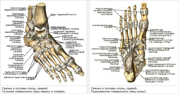 Code hallux varus repair. Вальгусная деформация стопы. Шишка, косточка на большом пальце стопы. Лечение Халюс Вальгус без операц