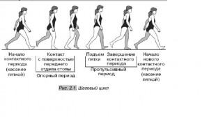 рис 2.1 Шаговый цикл