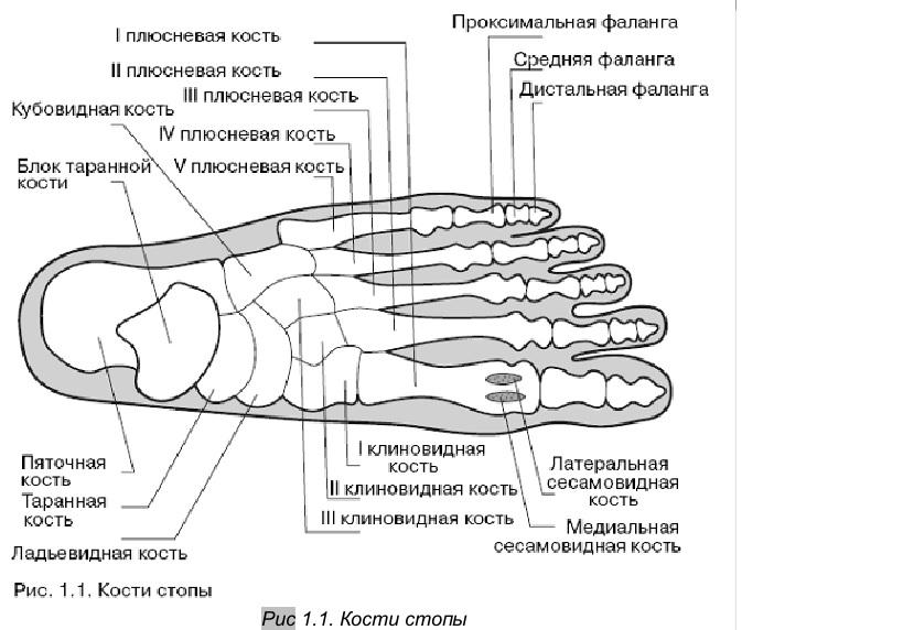 Сесамовидная кость голеностопного сустава артрозный артрит коленного сустава лечение